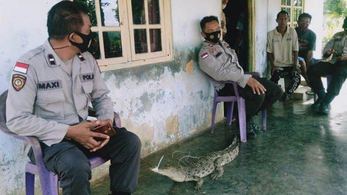 Berniat Mencari Ikan, Warga di Rote Ndao Malah Dapat Buaya