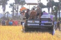 Bupati dan Wakil Bupati Belu Panen Padi Pakai Mesin Modern Combine Harvester