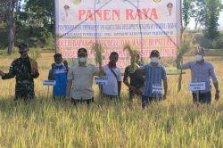 PANEN---Bupati dan Wakil Bupati Belu, dr. Taolin Agustinus, Sp.PD dan Drs. Aloysius Haleserens, MM melakukan panen raya padi varietas Ciherang milik Kelompok Tani Ta'u Oan, Desa Dafala, Kecamatan Tasifeto Timur, Rabu (12/5/2021).