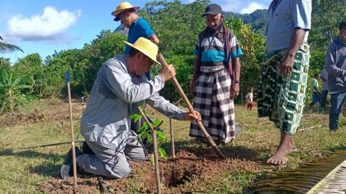 Bupati Nagekeo, Johannes Don Bosco Do saat menanam anakan cengkeh di Desa Udiworowatu, Jumat (30/4/2021).