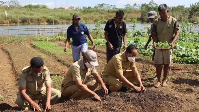 Bupati Paul Limu Dorong Petani Hortikultura Perluas Lahan Tanam Lombok