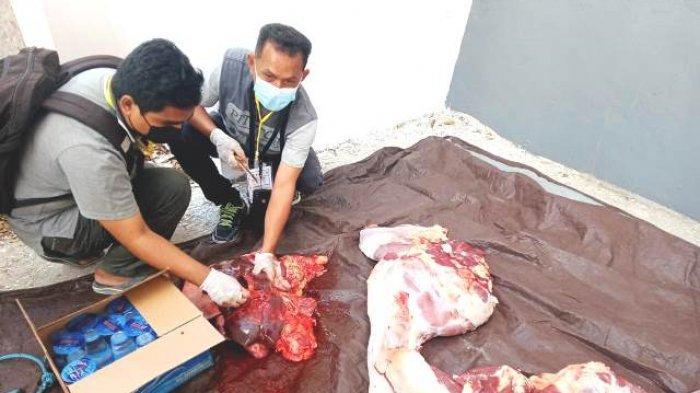 Di Kota Kupang, Daging Kurban Langsung ke Rumah Warga Tanpa Ambil Kupon