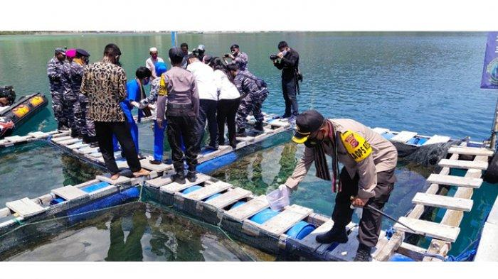 Danlantamal Kupang, Bupati Sikka Bersama Forkompimda Sikka Tabur Ikan Kerapu di Desa Kojadoi