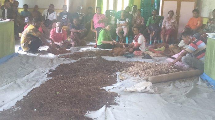 Di Oelekam TTS Dana Desa Dimanfaatkan untuk Pelatihan Pembuatan Pupuk Organik