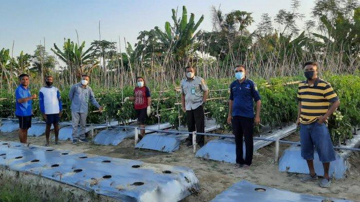 Kepala BPTP NTT Sambangi Lahan Pegembangan Holtikultura Petani Desa Umatoos