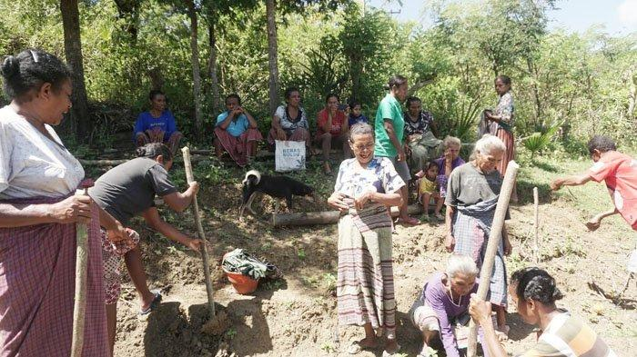 Eduard Tanur Menggenapi Mimpi Kelompok Tani Bitobe, Bikomi Utara