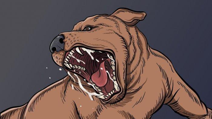 Inilah Ciri-ciri Anjing Rabies dan Gejala Rabies Pada Manusia, Wajib Kamu Tahu