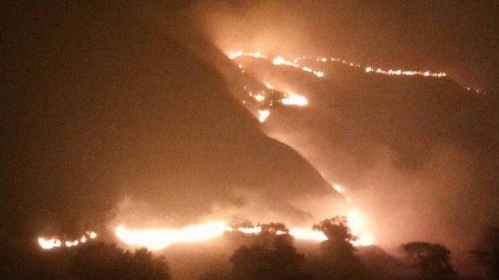 11 Orang Diperiksa Terkait Kebakaran Gili Lawa TN Komodo, Polisi Belum Tetapkan Tersangka