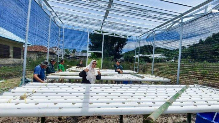 Karang Taruna Desa Golo Bilas Kabupaten Mabar Kembangkan Tanaman Hidroponik