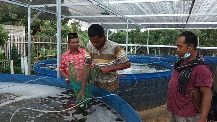 Ikan Air Tawar Desa Liang Sola Kabupaten Mabar Diburu Pembeli