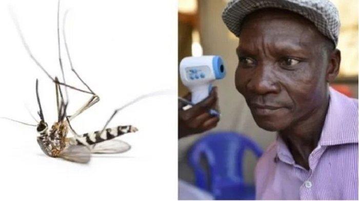 Seorang Pria Uganda Joe Rwamirama Mengaku Bisa Bunuh Nyamuk dengan Kentut, Ini Fakta Sebenarnya