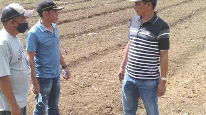 Wabup John Lado Tinjau Persiapan Lokasi Penangkaran Benih Jagung di Desa Sobarade, Sumba Barat