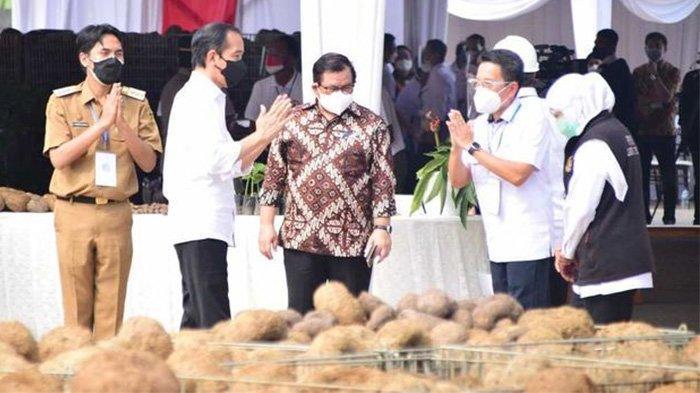 Jokowi Terkesima Dengar Cerita Petani Porang, Baru Tiga Tahun Bisa Bawa Pulang Mobil