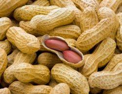 Narkoba Diselundupkan dalam Kacang Kulit - Pos Kupang