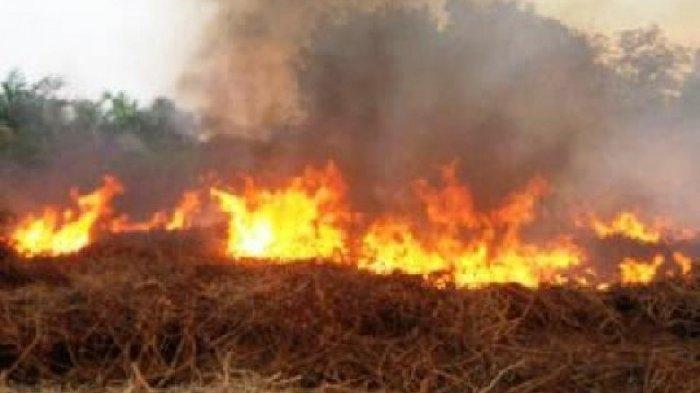 BMKG Beri Peringatan Dini kepada Warga Agar  Waspada Terhadap Potensi Kebakaran Lahan di NTT