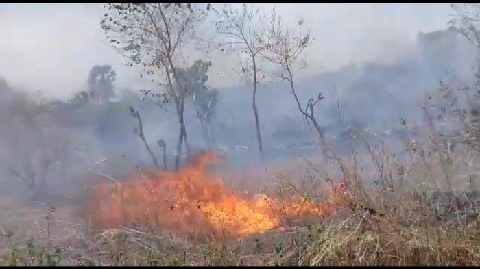 kebakaran lahan milik warga di Kelurahan Bello, Kota Kupang, Sabtu (10/10/2020) sekitar pukul 13.00 Wita