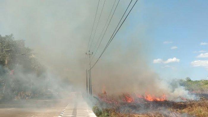 Kebakaran Lahan di Jl. Piet A Tallo, Oesapa Selatan, Kecamatan Kelapa Lima, Kupang, Sabtu, 06/06/2020. POS-KUPANG. COM/ONCY REBON