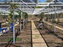 Kebun Undana Hadirkan Konsep Agro-Eko-Edu-Wisata