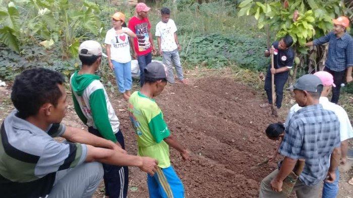 Aparat Desa Liang Sola Mabar Praktek Cara Pembuatan Pupuk Kompos Padat Dan Pupuk Organik Cair