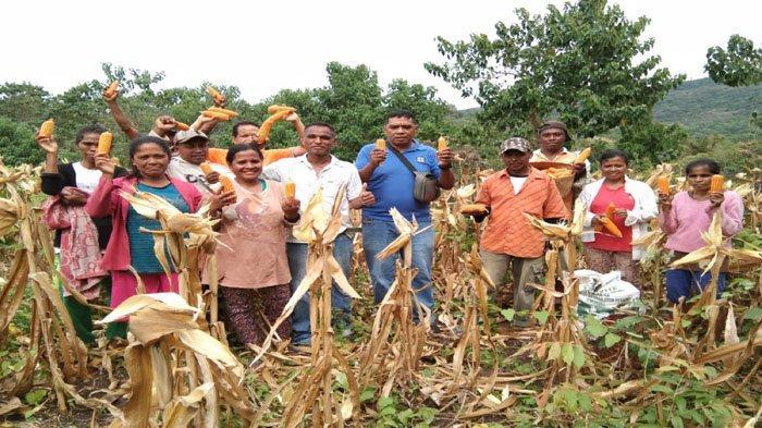 Kembangkan Potensi Lokal, DPA asal Flores Timur Jadi Milyader