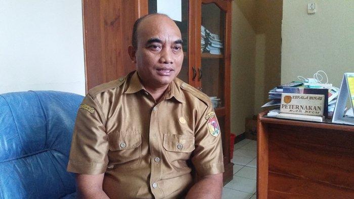 Kepala Dinas Dinas Peternakan Kabupaten Belu, Nikolaus Umbu Birri