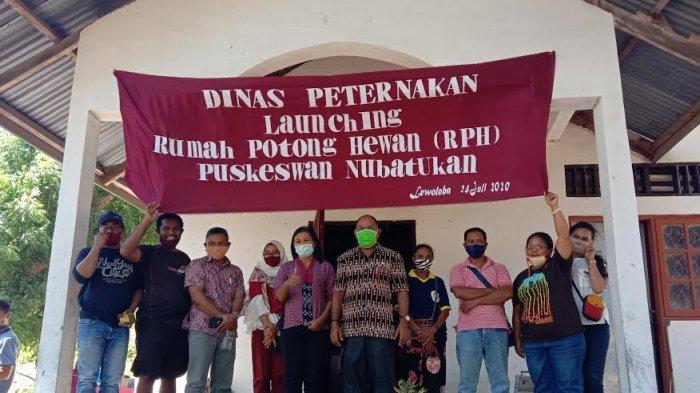 Launching Rumah Potong Hewan, Dinas Peternakan Lembata Pastikan Daging Sehat Dikonsumsi