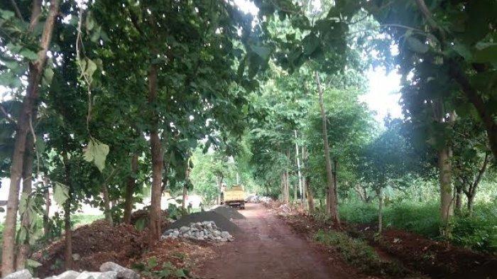 Terkait Peningkatan Jalan di Kelurahan Liliba Oleh Pemkot Kupang, Begini Tanggapan Warga