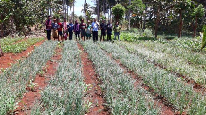 Kopdit Swasti Sari Bantu Anggota, Tingkatkan Taraf Ekonomi Lewat Kelompok Binaan