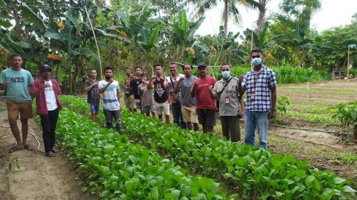 Kembangkan Usaha Hortikultura di Malaka, Kementan Dorong PWMP KUB