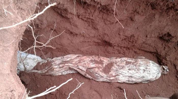 Diduga Meninggal Tidak Wajar, Polisi Menggali Kubur Felix untuk Penyelidikan