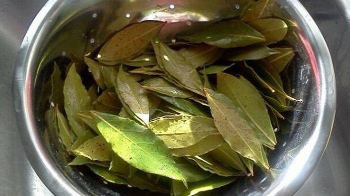 Manfaat daun salam bagi kesehatan
