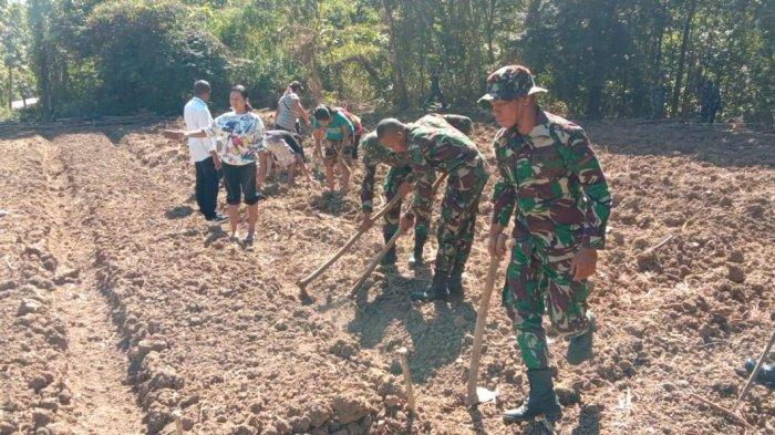 TNI dan Petani Kerja Bareng Olah Lahan Pertaniandi Kabupaten Belu