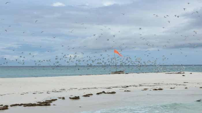 Misteri Pulau Nuha Watan Peni dan Uniknya Kolam Raksasa di Wisata Pasir Timbul Meko Adonara