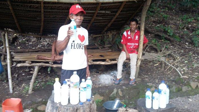 Yoseph Narek warga kampung Wolo Desa Watotika Ile kecamatan Demon Pagong Flotim sedang memegang moke, Selasa (13/3/2018).
