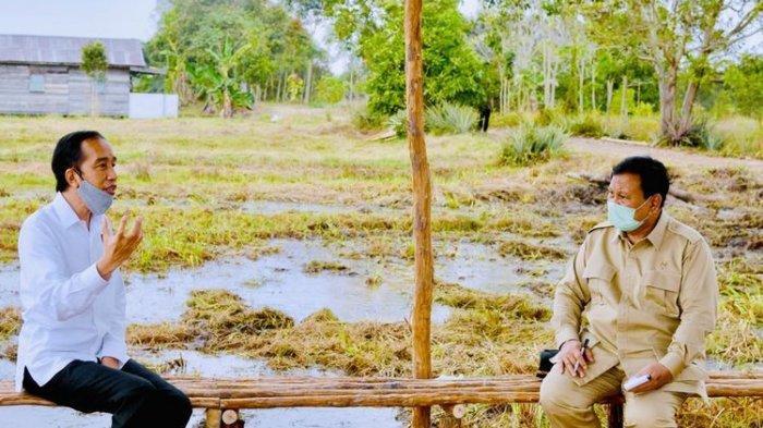 Tunjuk Prabowo Jadi Pimpro Lumbung Pangan Nasional di Kalteng, Simak Pertimbangan Presiden Ini!