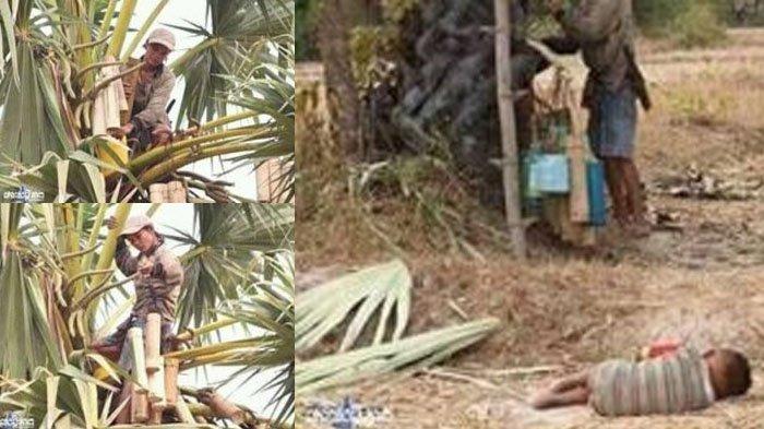 Viral, Seorang Ibu Menyadap Nira Pohon Lontar, Bocah Laki-laki Menunggu Sambil Tiduran
