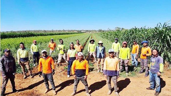 Australia Umumkan Reformasi Program Mobilitas Tenaga Kerja Australia Pasifik dan Timor Leste