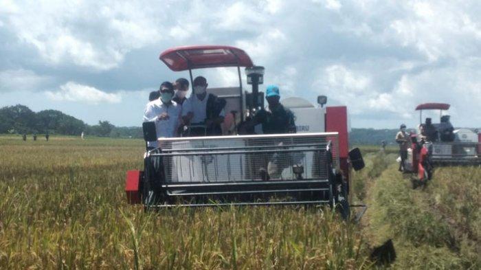Pacu Petani Tanam Jagung, Gubernur NTT Janji Bangun Pakan Ternak di Sumba Tengah