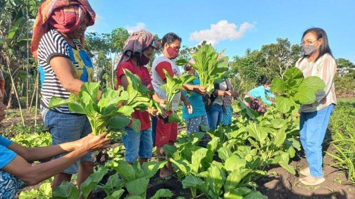 Anggota KWT Gori Toing Bangka Kantar Matim Dapat Ilmu Buat Pupuk Organik dan Budidaya Hortikultura