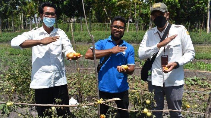 Keren, Kelompok Petani Milenial Jaga Kestabilan Pangan dengan Panen Perdana