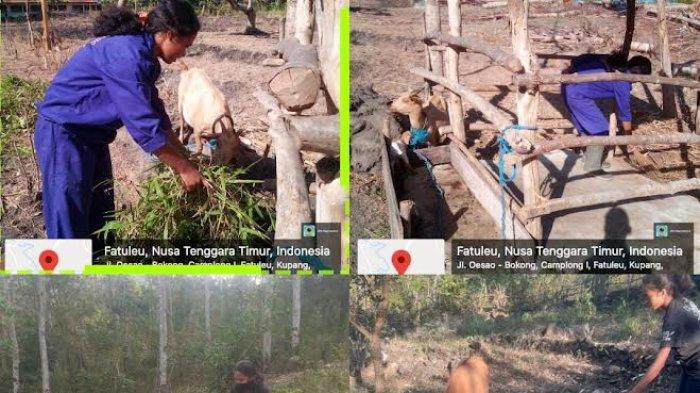 Semangat Luar Biasa, SMK PP Negeri Kupang Tetap Produktif Laksanakan Praktik Kerja Lapang