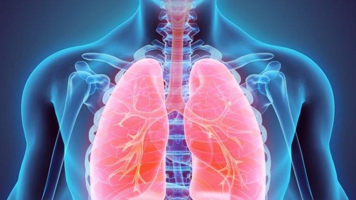 Wajib Tahu Moms, 10 Bahan Alami untuk Menjaga Kesehatan Paru-paru Anda