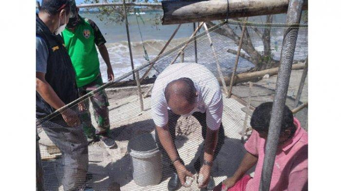 Pemda Flotim dan Pokmaswas Suleng Waseng Solor Selatan Lepas 78 Ekor Tukik