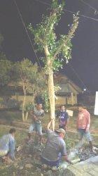Pemerintah Kota Kupang Terus Lakukan Gebrakan Gerakan Menanam Pohon