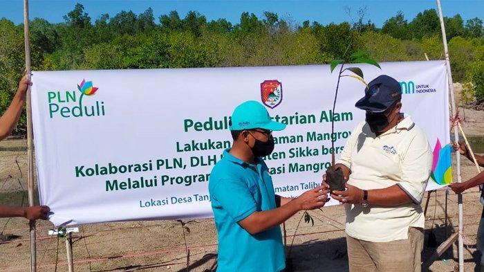 PLN dan DLH Kabupaten Sikka Kolaborasi Tanam 2.000 Anakan Mangrove
