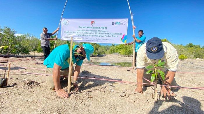 Kegiatan penanaman Mangrove PLN bersama masyarakat untuk Konservasi Mangrove Pesisir Pantai di Desa Darat Pantai KecamatanTalibura tanggal 7 Oktober 2021.