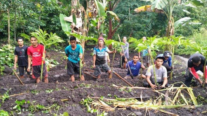 Budidayakan Porang, Petani Muda Manggarai Timur Raih Omzet Puluhan Juta
