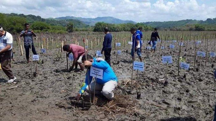 Pjs. Bupati Pakereng Tanam Mangrove di Pesisir Pantai Karewe