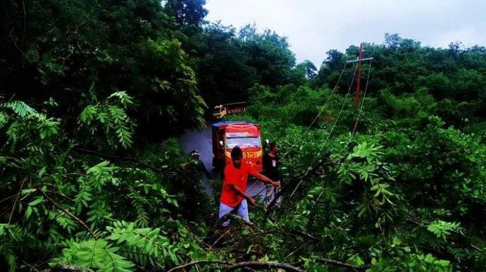 Pohon Tumbang Ancam Jaringan Listrik Ende, PLN Flores Sulit Antisipasi