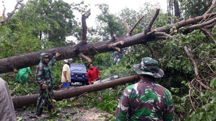 Di Lamba Leda, Manggarai Timur - NTT Pohon Tumbang Robohkan Rumah Warga Halangi Lalulintas Jalan